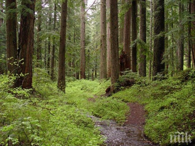 Въвежда се електронен превозен билет за всички собственици на гори