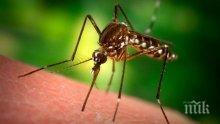 Ето как да се отървете от досадните насекоми