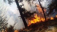 Пожар обхвана 150 декара гора край Перник
