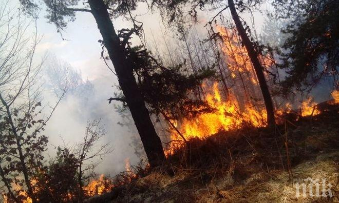 Над 100 декара борова гора пламна като факел край Ардино
