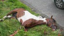 Мерцедес утрепа кон и рани каруцар