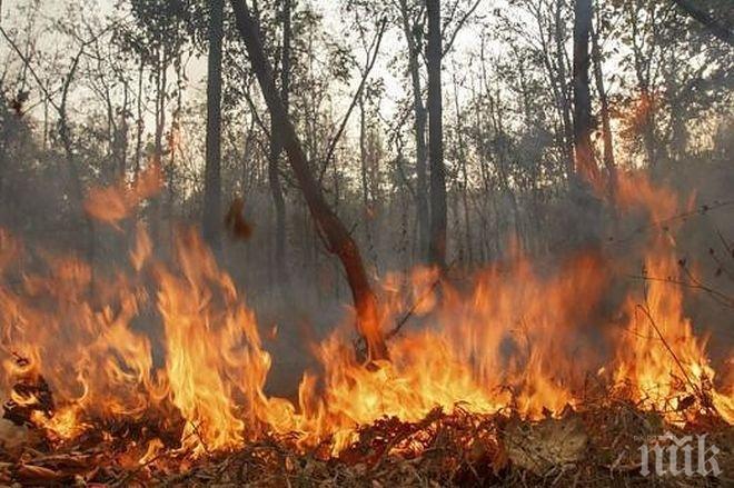 Повече от 3 000 дка горска територия е засегната от двата големи пожара днес