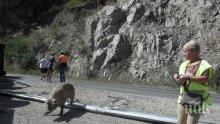 За по 25 евро роми извадиха разлагащите се трупове на прасетата от катастрофата в Кресненското дефиле