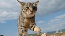 Котките са покорявали света с викингите