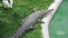 Ужас: Крокодил нападна момиче, къпещо се в басейн на хотел (ВИДЕО)