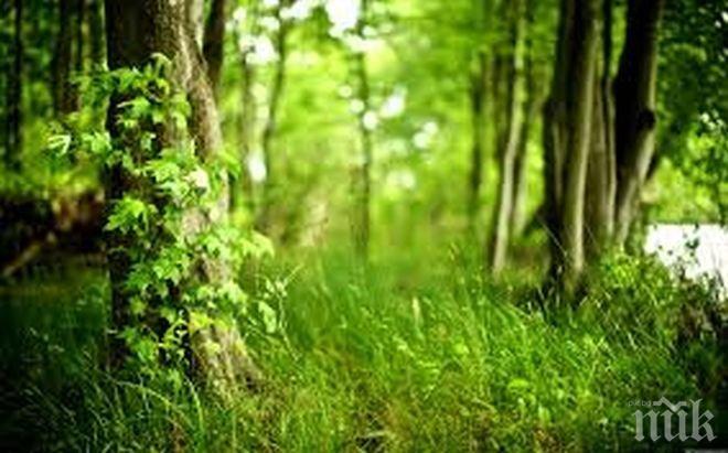 Обявиха нови 109 гори със специален статут