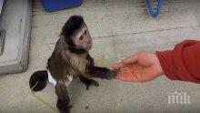 20 убити в Либия след невинен инцидент с маймунка