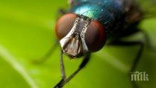 Учени откриха нов вид мухи убийци