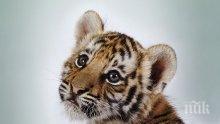 Подаръци за лъвчета и сурикати в Лондонския зоопарк