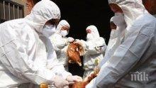 10 огнища на птичи грип тлеят в страната