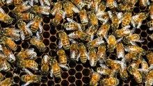 Здрави ли са пчелните семейства?