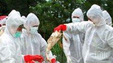 Продавач на патици почина от птичи грип