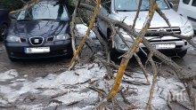 Дърво се стовари върху две коли във Варна
