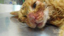 Котка беглец нахълта в зоомагазин и се надруса с трева (ВИДЕО)