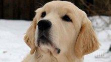 ГЕРОЙ! Куче спаси от бяла смърт парализирания си стопанин