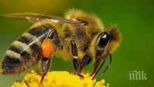 Дрон ще опрашва цветята вместо пчелите