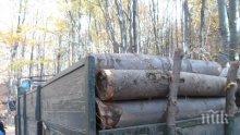 Кметове пропищяха от тежките камиони с дървесина