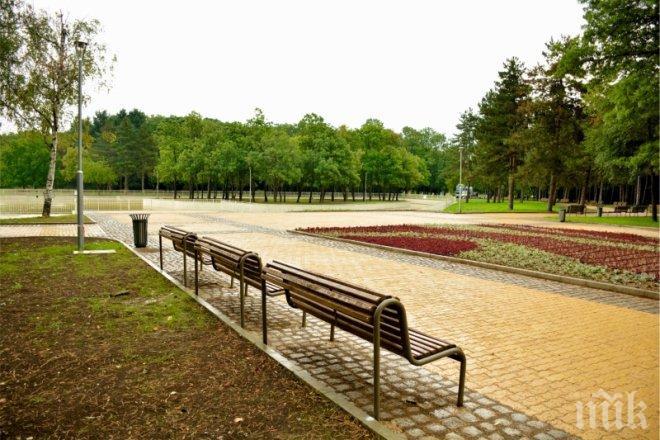 Skandalno Otryazaha Krasivo Drvo V Severniya Park Snimki