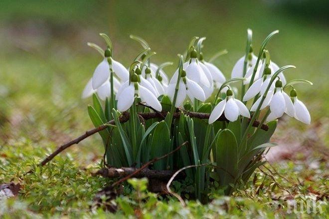 Очаква ни пролетна неделя: Градусите достигат до 20!