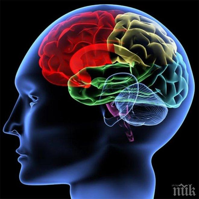 Днес е световният ден на мозъка. Вижте коя нация е най-интелигентната в света