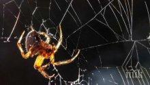 НАУЧЕН ПРОБИВ! Отровата на фуниеобразните паяци спасява живот след инсулт