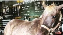 НОВАТОР! Ветеринар предписа на кон да пие бира цяла година