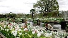 Направиха уникална бяла градина в чест на принцеса Даяна (СНИМКИ)