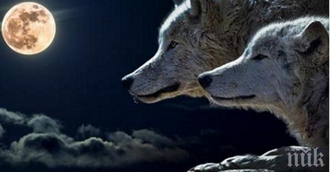 Притча за 2-та вълка! Ще я прочетеш за 10 секунди, но ще я запомниш завинаги!