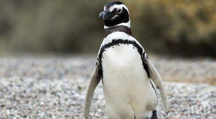 """Самотен пингвин си търси мацка в сайта за запознанства """"Много риба"""" (СНИМКИ)"""