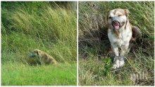 Намериха в канавка живо куче със завързани крака и лента около муцуната това, което последва...