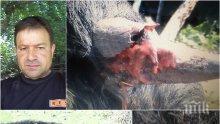 ИЗВЪНРЕДНО И САМО В ПИК! Бруталното зверство срещу добитък е за пасище! Атанас Стойков е бил пребиван, унижаван, а животните му изтребвани! Кои хора от Несебър са му вдигнали мерника и го мачкат! (СНИМКИ18+)