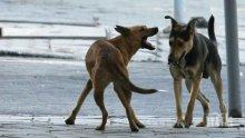 ВНИМАНИЕ! Бездомни кучета изскачат пред колите в Кресненското дефиле, предизвикват катастрофи