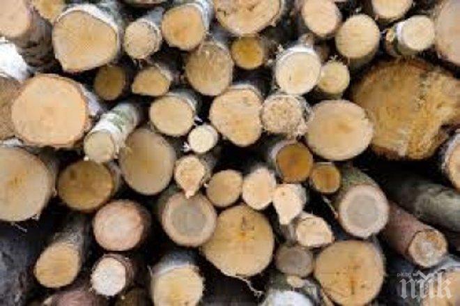 Откриха незаконен склад за дървесина край Луковит