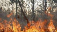Високите температури доведоха до 11 горски пожара в Албания