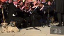 Бездомно куче се включи в концерт на Виенската филхармония, изслуша Менделсон