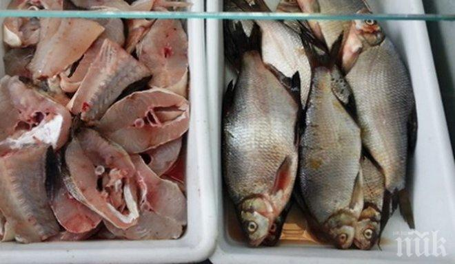 ВНИМАНИЕ! В Кюстендил спипаха риба менте с изтекъл срок на годност