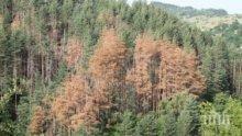 Горите на България съхнат заради Тома Белев и корояда