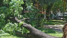 Буря отнесе стълбове и дървета в Шумен