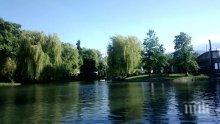 Пускат 5 зеленоглави патета в Борисовата градина