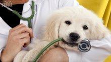 Кучета подушват кой е болен от рак