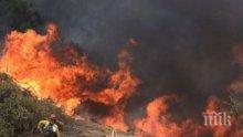 Огнен ужас в Тунис! Пожарите обхванаха повече от 2000 хектара гори