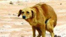 Малчуган от Сандански спешно транспортиран в София със съмнение за кучешка тения