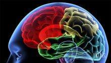 ДОКАЗАНО! Женският мозък е по-активният