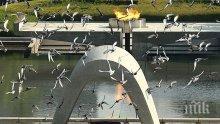 Япония ще почете жертвите на атомната бомбардировка на Нагасаки