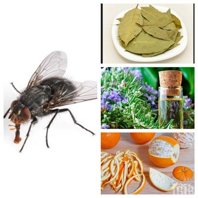 Бой по мухите с билки и подправки! Изгонете ги от дома си завинаги