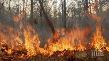 ОПАСНО! Пожарът край Присадец се разраства, може да мине и в Турция