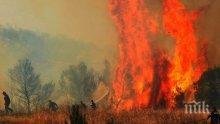 Евакуация в Гърция! Огромен пожар вилнее на Пелопонес