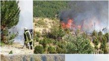 БЕДСТВИЕ! Екокатастрофа след пожара в Кресненското дефиле! Гората ще се възстановява поне 50 години, трябват 15 млн. лева за залесяване