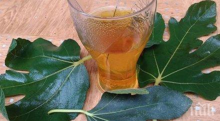 Тези листа са 100 пъти по-мощни от чесъна и джинджифила! Топят тлъстините като с магическа пръчка!