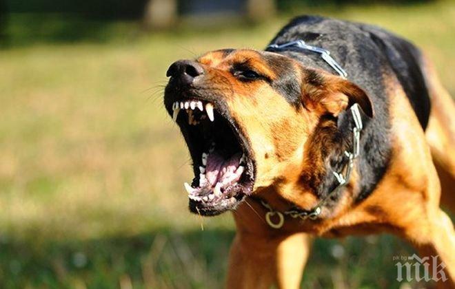 ШОК! Кучета нахапаха до смърт малко момченце